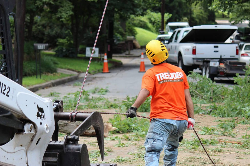 Arborist Consultations-Jonesboro Tree Trimming and Stump Grinding Services-We Offer Tree Trimming Services, Tree Removal, Tree Pruning, Tree Cutting, Residential and Commercial Tree Trimming Services, Storm Damage, Emergency Tree Removal, Land Clearing, Tree Companies, Tree Care Service, Stump Grinding, and we're the Best Tree Trimming Company Near You Guaranteed!