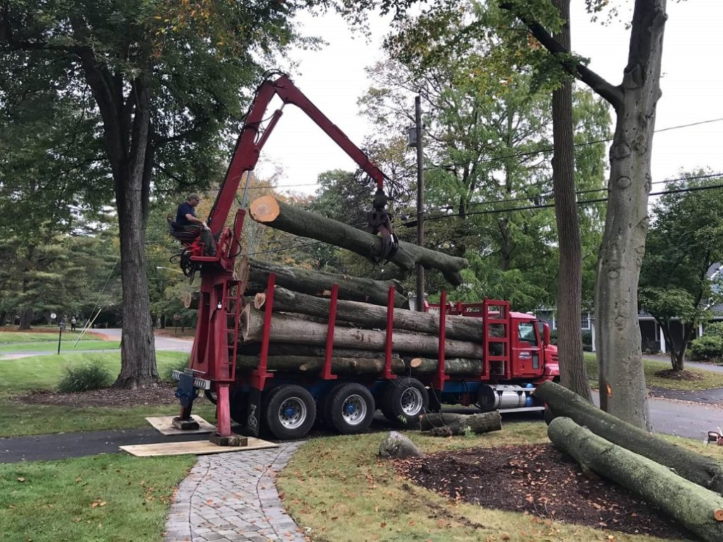 Commercial Tree Services-Jonesboro Tree Trimming and Stump Grinding Services-We Offer Tree Trimming Services, Tree Removal, Tree Pruning, Tree Cutting, Residential and Commercial Tree Trimming Services, Storm Damage, Emergency Tree Removal, Land Clearing, Tree Companies, Tree Care Service, Stump Grinding, and we're the Best Tree Trimming Company Near You Guaranteed!