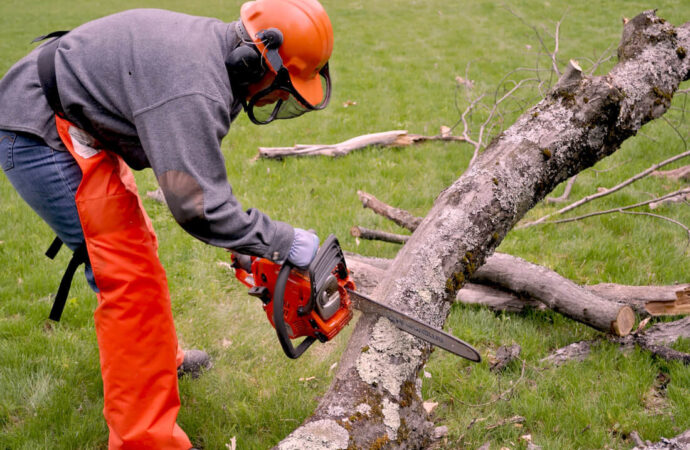 Emergency Tree Removal-Jonesboro Tree Trimming and Stump Grinding Services-We Offer Tree Trimming Services, Tree Removal, Tree Pruning, Tree Cutting, Residential and Commercial Tree Trimming Services, Storm Damage, Emergency Tree Removal, Land Clearing, Tree Companies, Tree Care Service, Stump Grinding, and we're the Best Tree Trimming Company Near You Guaranteed!
