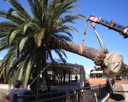 Palm Tree Removal-Jonesboro Tree Trimming and Stump Grinding Services-We Offer Tree Trimming Services, Tree Removal, Tree Pruning, Tree Cutting, Residential and Commercial Tree Trimming Services, Storm Damage, Emergency Tree Removal, Land Clearing, Tree Companies, Tree Care Service, Stump Grinding, and we're the Best Tree Trimming Company Near You Guaranteed!