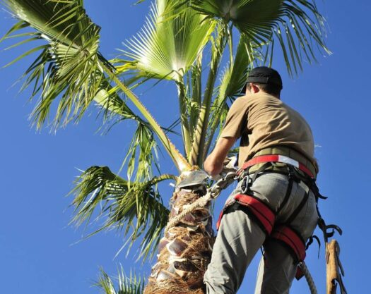 Palm Tree Trimming-Jonesboro Tree Trimming and Stump Grinding Services-We Offer Tree Trimming Services, Tree Removal, Tree Pruning, Tree Cutting, Residential and Commercial Tree Trimming Services, Storm Damage, Emergency Tree Removal, Land Clearing, Tree Companies, Tree Care Service, Stump Grinding, and we're the Best Tree Trimming Company Near You Guaranteed!