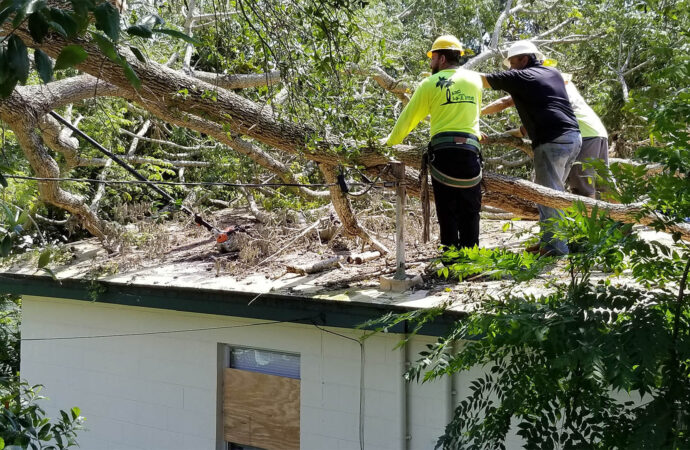 Storm Damage-Jonesboro Tree Trimming and Stump Grinding Services-We Offer Tree Trimming Services, Tree Removal, Tree Pruning, Tree Cutting, Residential and Commercial Tree Trimming Services, Storm Damage, Emergency Tree Removal, Land Clearing, Tree Companies, Tree Care Service, Stump Grinding, and we're the Best Tree Trimming Company Near You Guaranteed!