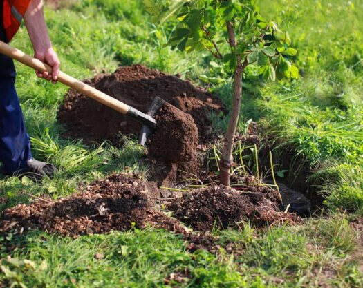 Tree Planting-Jonesboro Tree Trimming and Stump Grinding Services-We Offer Tree Trimming Services, Tree Removal, Tree Pruning, Tree Cutting, Residential and Commercial Tree Trimming Services, Storm Damage, Emergency Tree Removal, Land Clearing, Tree Companies, Tree Care Service, Stump Grinding, and we're the Best Tree Trimming Company Near You Guaranteed!