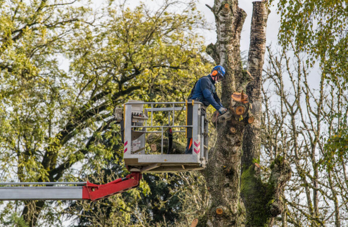 Tree Trimming-Jonesboro Tree Trimming and Stump Grinding Services-We Offer Tree Trimming Services, Tree Removal, Tree Pruning, Tree Cutting, Residential and Commercial Tree Trimming Services, Storm Damage, Emergency Tree Removal, Land Clearing, Tree Companies, Tree Care Service, Stump Grinding, and we're the Best Tree Trimming Company Near You Guaranteed!