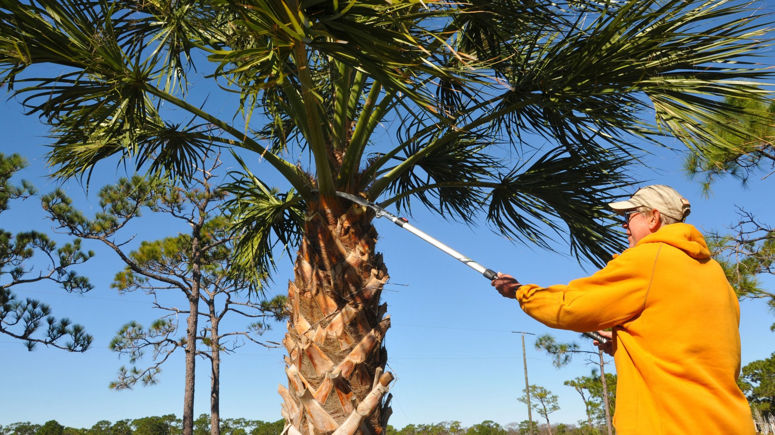 Cash-Jonesboro Tree Trimming and Stump Grinding Services-We Offer Tree Trimming Services, Tree Removal, Tree Pruning, Tree Cutting, Residential and Commercial Tree Trimming Services, Storm Damage, Emergency Tree Removal, Land Clearing, Tree Companies, Tree Care Service, Stump Grinding, and we're the Best Tree Trimming Company Near You Guaranteed!